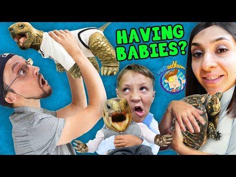 WE'RE HAVING MORE BABIES! FV Family SCREAMINGLY FUNNY Vlog